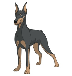 Color image of a doberman vector