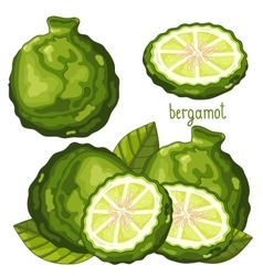 Bergamot isolated vector