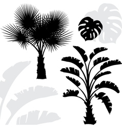 Palm trees black silhouettes on white background vector