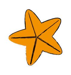 starfish or sea star icon image vector image