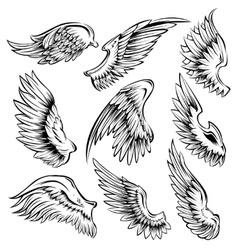 Bird wings black white set vector