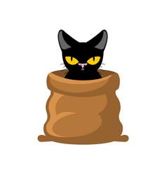 Cat in bag pet in sack allegory bad buy vector