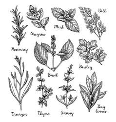 Herbs sketch set vector