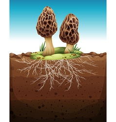 Mushroom growing from underground vector image