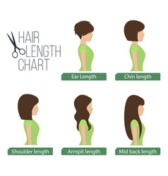 Hair length chart side view vector