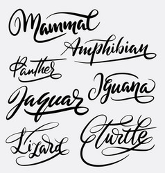 mammal and amphibian hand written typography vector image