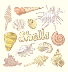 seashells hand drawn aquatic doodle marine vector image
