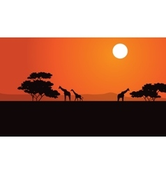 Zebra at afternoon scenery vector