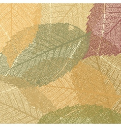 Dry autumn leaves vector