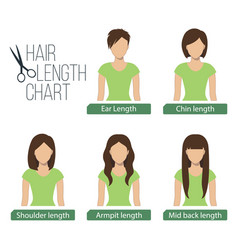 Hair length chart front view vector