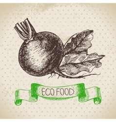 Hand drawn sketch beet vegetable Eco food vector image vector image