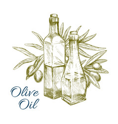 Olive oil and green olives branch sketch vector