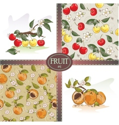 Cherries and apricots vector image vector image