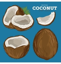 Coconut isolated vector