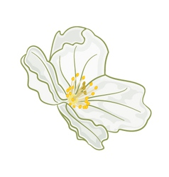 Flower jasmine isolated on a white background vector