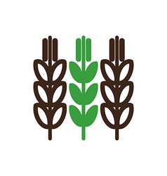 Spikelets of wheat icon farm vector