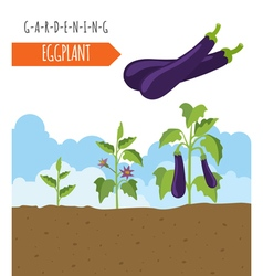 Gardening work farming eggplant graphic template vector