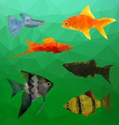 Aquarium fish in polygon style vector