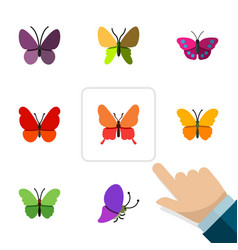 Flat butterfly set of butterfly beauty fly vector