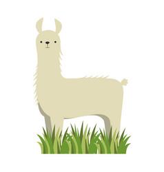 Peruvian llama isolated icon vector