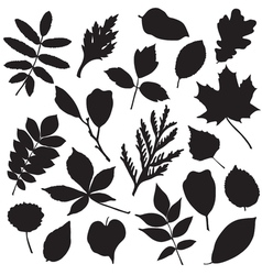 Collection of leaves silhouettes vector