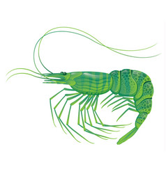 shrimp isolated on white vector image