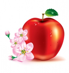 apple the fruit and flowers vector image vector image