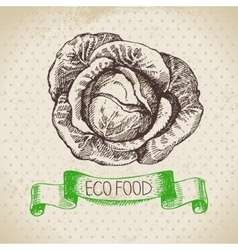 Hand drawn sketch cabbage vegetable eco food vector