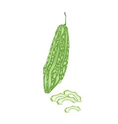 Fresh green bitter melon on white background vector