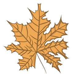 maple leaf drawing by hand vector image vector image