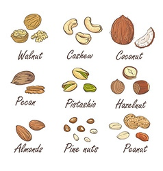 set of hand sketched nuts on white background in vector image