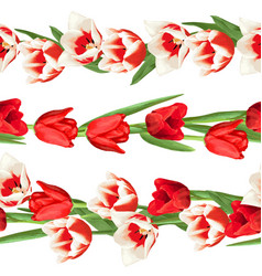 seamless borders with red and white tulips vector image