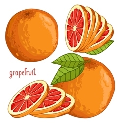 Grapefruit Isolated vector image