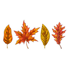 various yellow and orange autumn leaves isolated vector image vector image