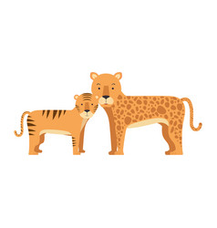 Wild tiger and leopard vector