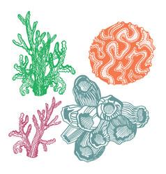 hand drawn coral set sketch vector image