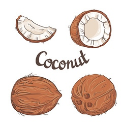 Coconut set - the whole nut a coco segment and vector