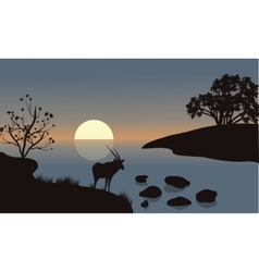 Antelope silhouette on the riverbank vector image vector image