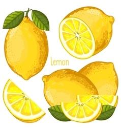 Lemon Isolated vector image vector image