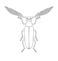 Skalbaggar beetle Cyriopalus wallacei Sketch of vector image