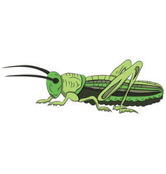 green grasshopper on a white background vector image