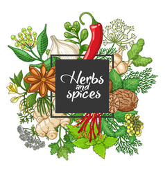 Hot square design with spices and herbs vector