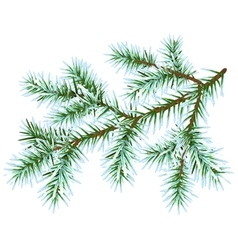 Frozen fir branch vector