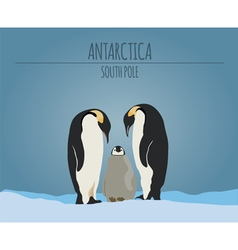 Antarctica south pole graphic template vector