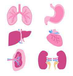 internal organs set viscera set flat style vector image