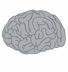 the brain vector image vector image