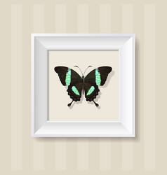 Green butterfly in a white frame vector