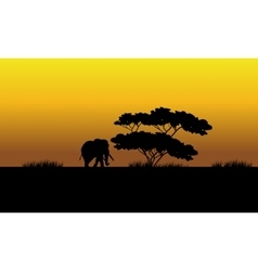 One elephant silhouette in the fields vector