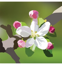 Spring Apple or Cherry flowers vector image