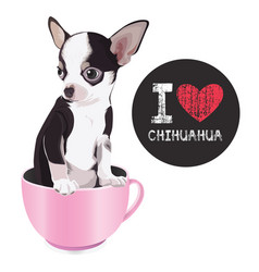 i love chihuahua vector image